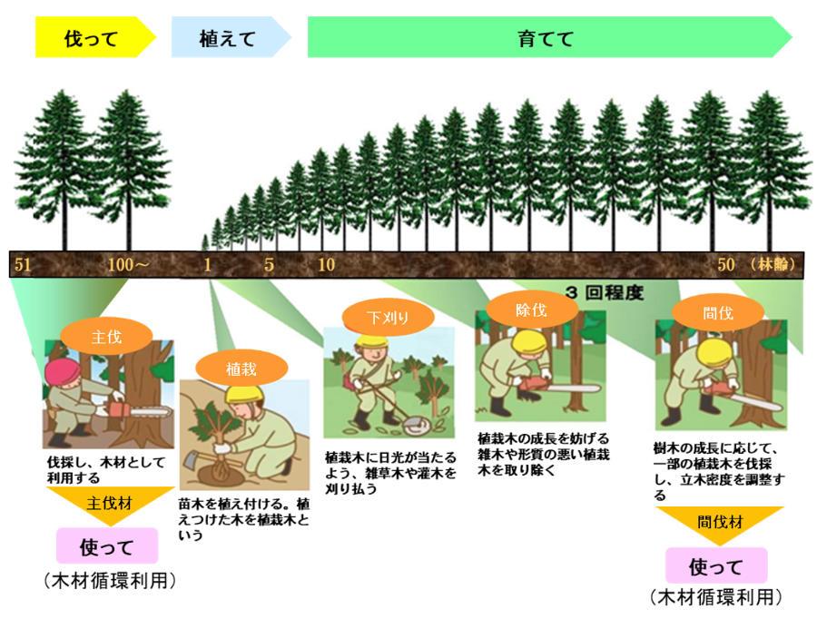 県内の民有林人工林の林齢別面積