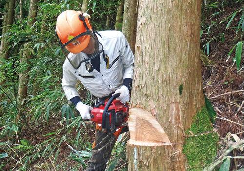林業の仕事を知る