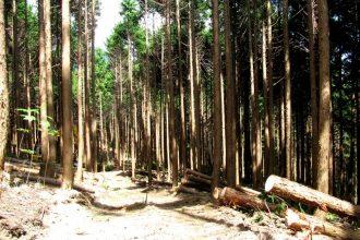 久万広域森林組合 間伐後の山林